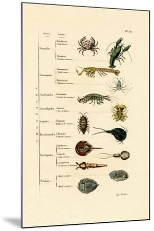 Crustaceans, 1833-39--Mounted Giclee Print