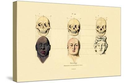 Phrenology, 1833-39--Stretched Canvas Print