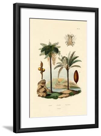 Tree Fern, 1833-39--Framed Giclee Print