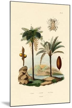 Tree Fern, 1833-39--Mounted Giclee Print