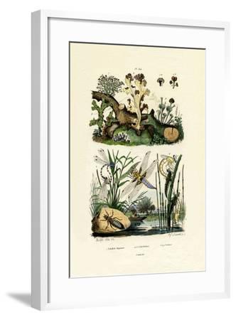 Dragonflies, 1833-39--Framed Giclee Print