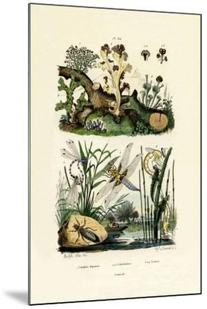 Dragonflies, 1833-39--Mounted Giclee Print