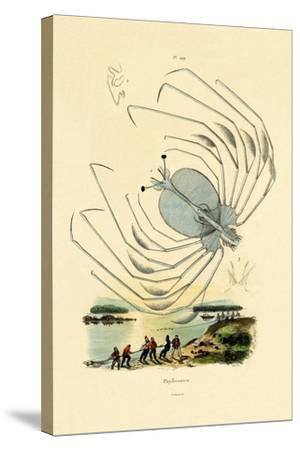 Phyllosome, 1833-39--Stretched Canvas Print