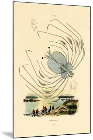 Phyllosome, 1833-39--Mounted Giclee Print