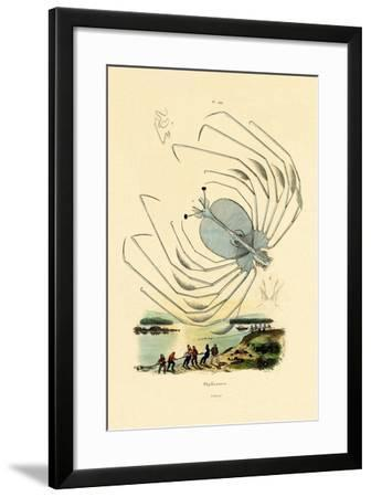Phyllosome, 1833-39--Framed Giclee Print