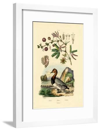 Coral, 1833-39--Framed Giclee Print