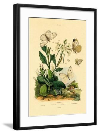 Large White, 1833-39--Framed Giclee Print