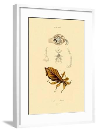 Leaf Insect, 1833-39--Framed Giclee Print
