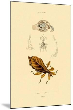 Leaf Insect, 1833-39--Mounted Giclee Print