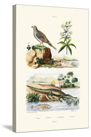 Sandgrouse, 1833-39--Stretched Canvas Print