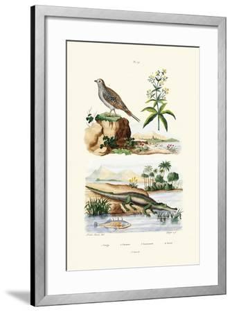 Sandgrouse, 1833-39--Framed Giclee Print
