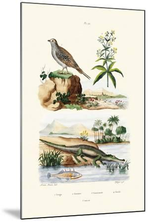 Sandgrouse, 1833-39--Mounted Giclee Print