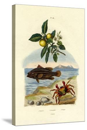 Guava, 1833-39--Stretched Canvas Print