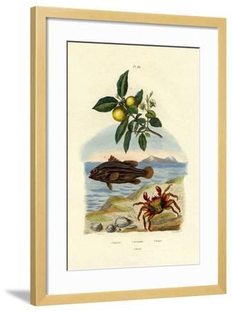 Guava, 1833-39--Framed Giclee Print