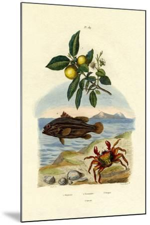 Guava, 1833-39--Mounted Giclee Print