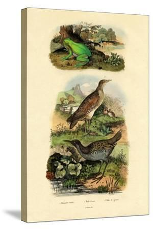 Water Rail, 1833-39--Stretched Canvas Print