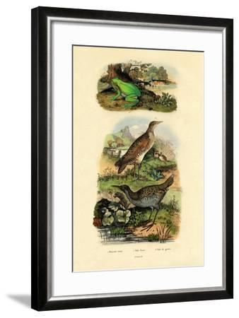 Water Rail, 1833-39--Framed Giclee Print