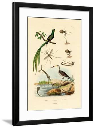 Curlew, 1833-39--Framed Giclee Print