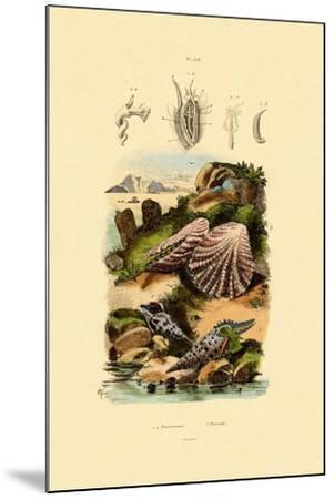 Slit Shells, 1833-39--Mounted Giclee Print