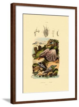 Slit Shells, 1833-39--Framed Giclee Print