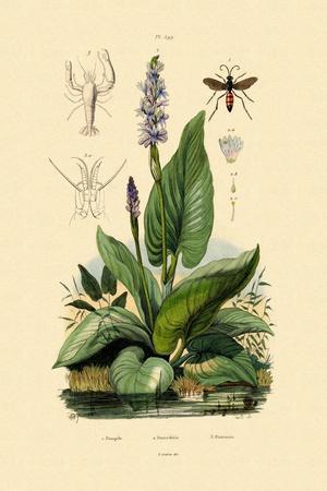 Spider Wasp, 1833-39--Framed Giclee Print