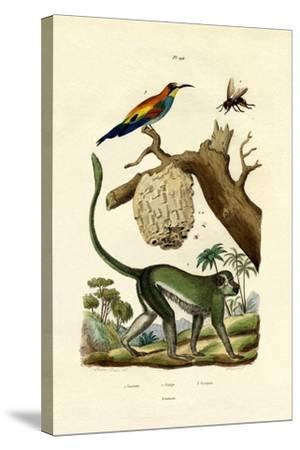 Guenon, 1833-39--Stretched Canvas Print