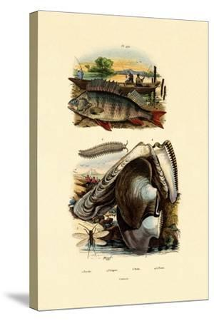Perch, 1833-39--Stretched Canvas Print