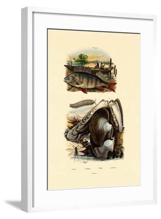 Perch, 1833-39--Framed Giclee Print