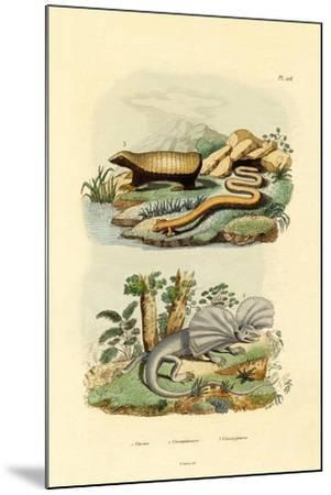 Worm Lizard, 1833-39--Mounted Giclee Print
