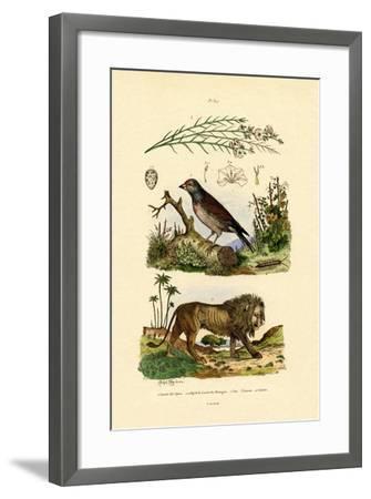Linnet, 1833-39--Framed Giclee Print