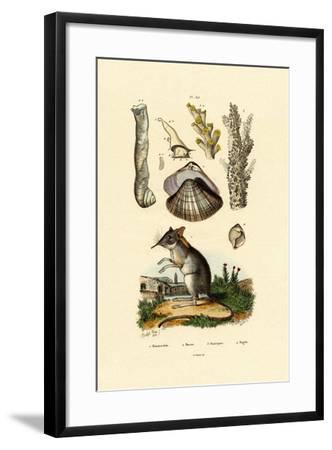 Shrew, 1833-39--Framed Giclee Print