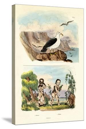 Albatros, 1833-39--Stretched Canvas Print