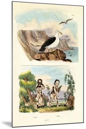 Albatros, 1833-39--Mounted Giclee Print