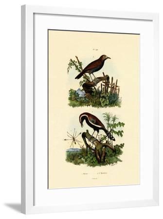 Antbirds, 1833-39--Framed Giclee Print