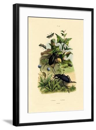 Beetles, 1833-39--Framed Giclee Print