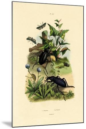 Beetles, 1833-39--Mounted Giclee Print