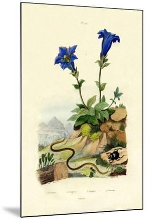 Gentian, 1833-39--Mounted Giclee Print