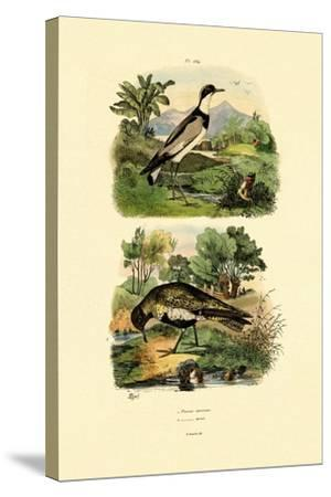 Plover, 1833-39--Stretched Canvas Print