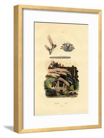 Grouper, 1833-39--Framed Giclee Print