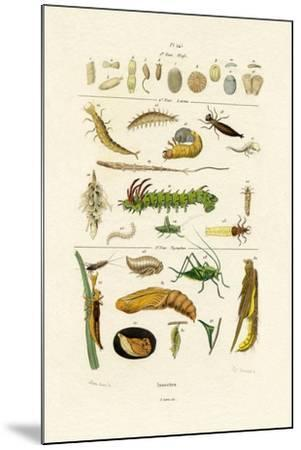 Insects, 1833-39--Mounted Giclee Print