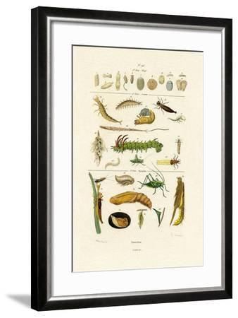Insects, 1833-39--Framed Giclee Print