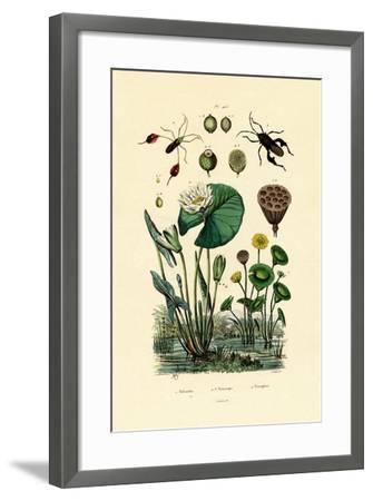 Sacred Lotus, 1833-39--Framed Giclee Print