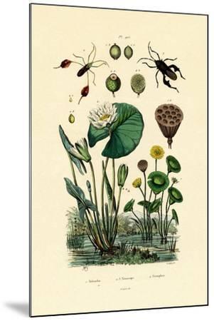 Sacred Lotus, 1833-39--Mounted Giclee Print