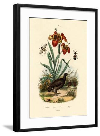 Tiger Flower, 1833-39--Framed Giclee Print
