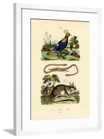 Dormouse, 1833-39--Framed Giclee Print