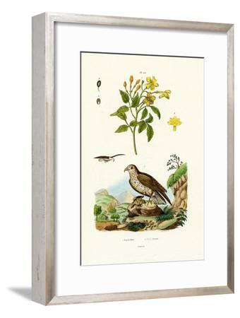 Jasmine, 1833-39--Framed Giclee Print