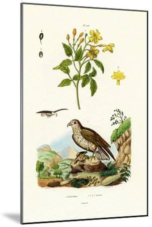 Jasmine, 1833-39--Mounted Giclee Print