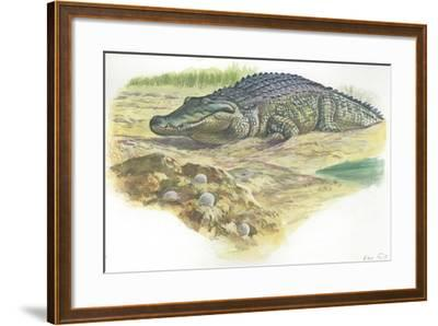 Nile Crocodile Crocodylus Niloticus Near its Laid Eggs--Framed Giclee Print