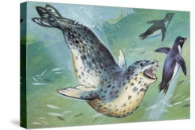Close-Up of a Leopard Seal Hunting a Penguin (Hydrurga Leptonyx)--Stretched Canvas Print