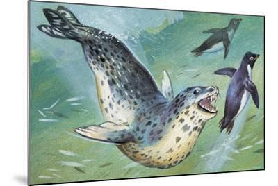 Close-Up of a Leopard Seal Hunting a Penguin (Hydrurga Leptonyx)--Mounted Giclee Print